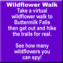 click here to take a virtual wildflower tour